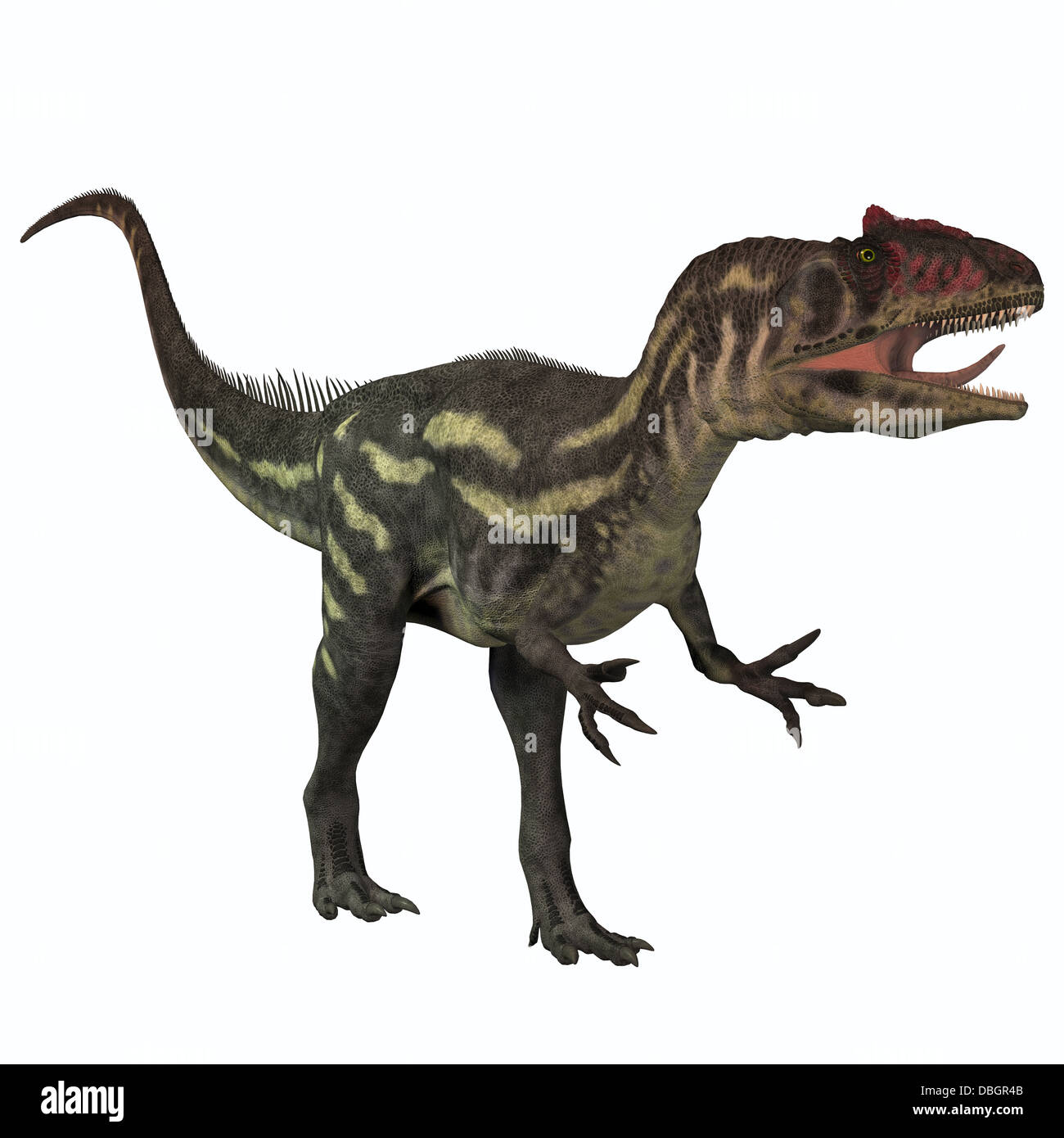 Allosaurus was a large theropod predatory dinosaur which lived in the late Jurassic period. Stock Photo