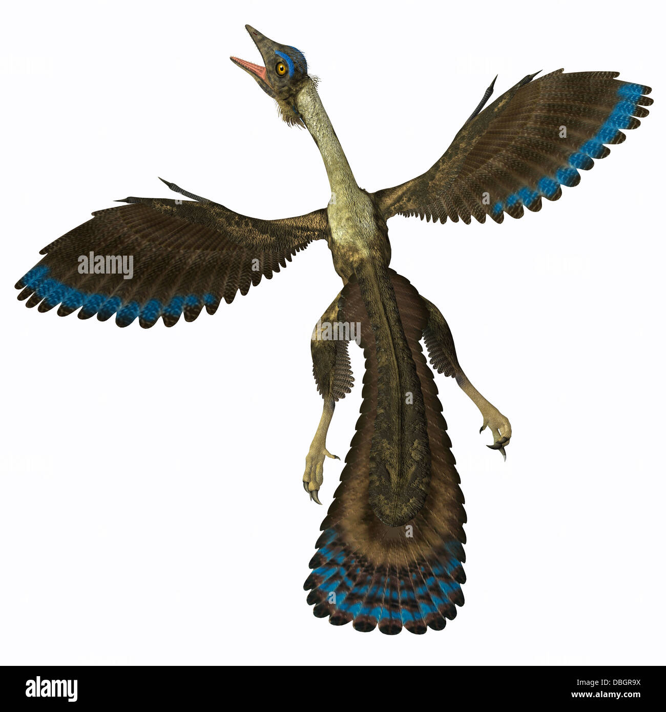 Archaeopteryx is known as the earliest bird and was a bridge species between dinosaurs and modern birds. - Stock Image