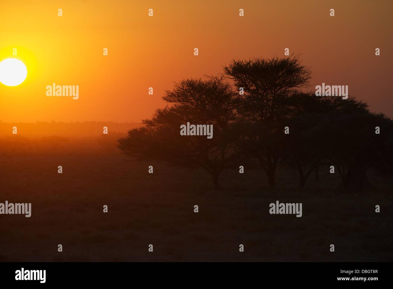 Sunset Etosha National Park Namibia Africa - Stock Image