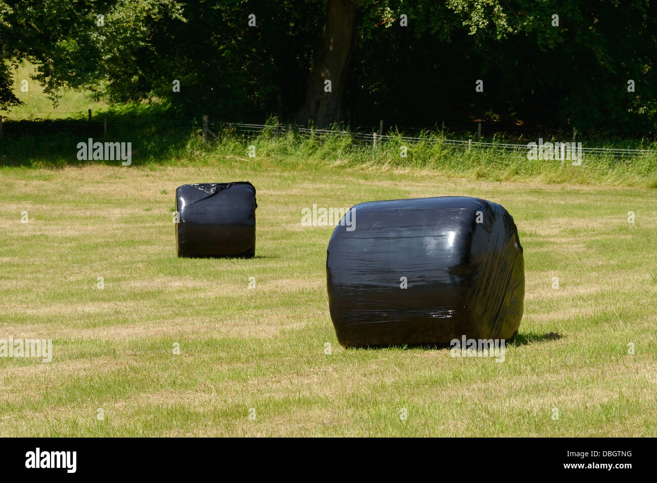 Bales of hay wrapped in black polythene - Stock Image
