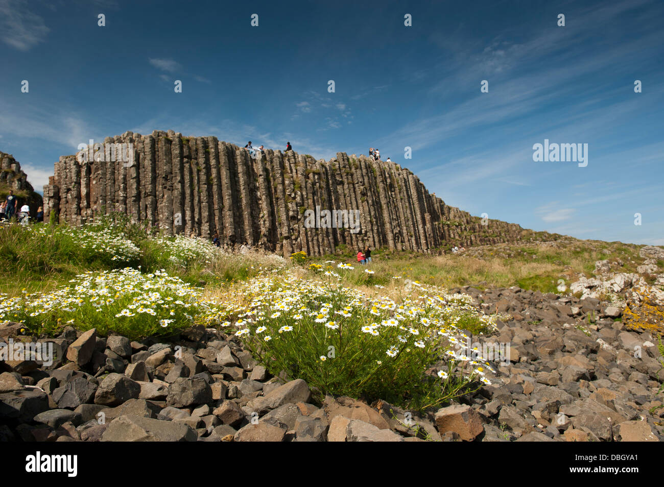 Visitors amongst the rocks and wildflowers at the Giants Causeway, Northern Ireland. - Stock Image