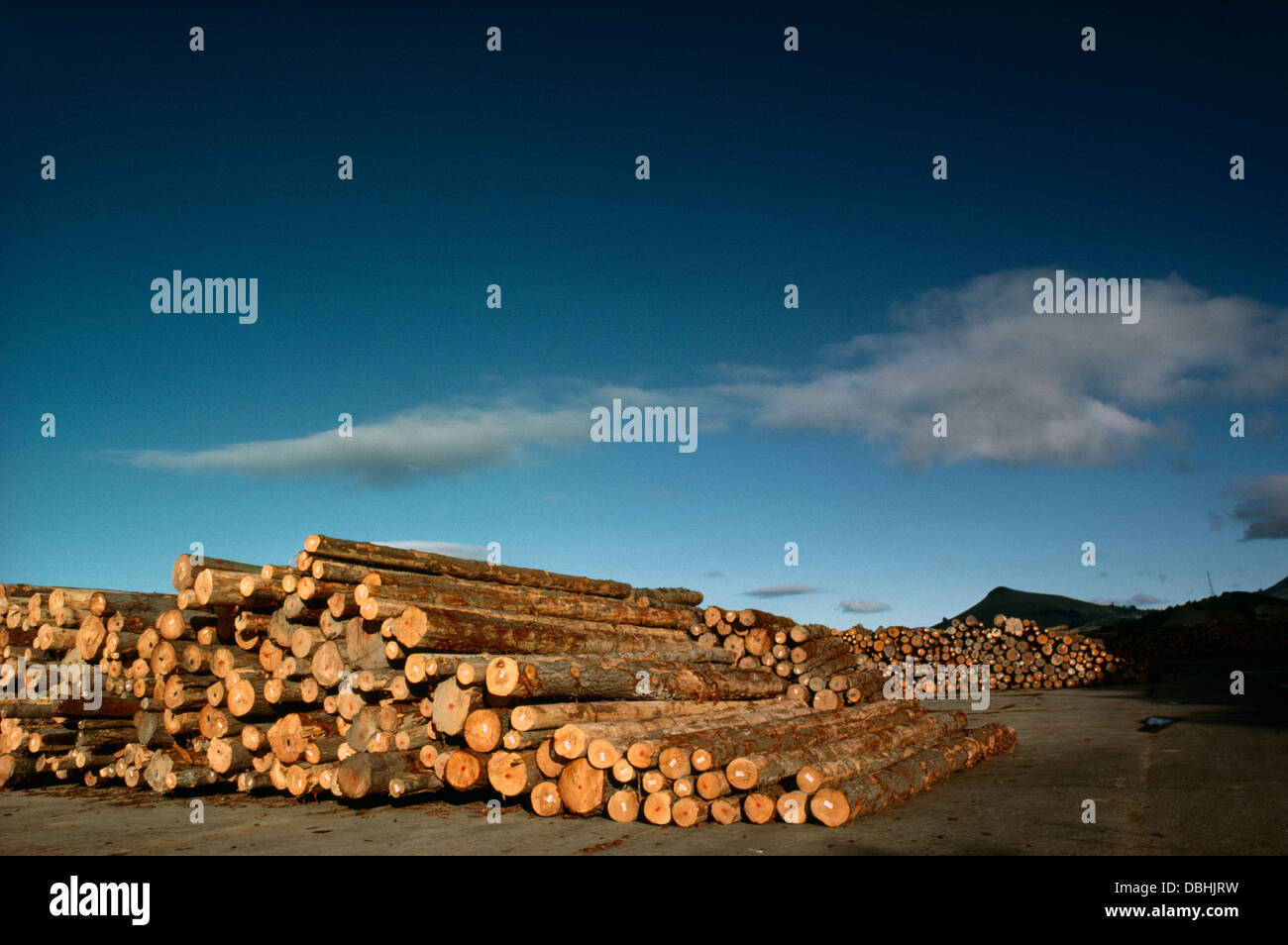 Picton New Zealand Picton Wood Exports Stacks Of Timber Logs - Stock Image