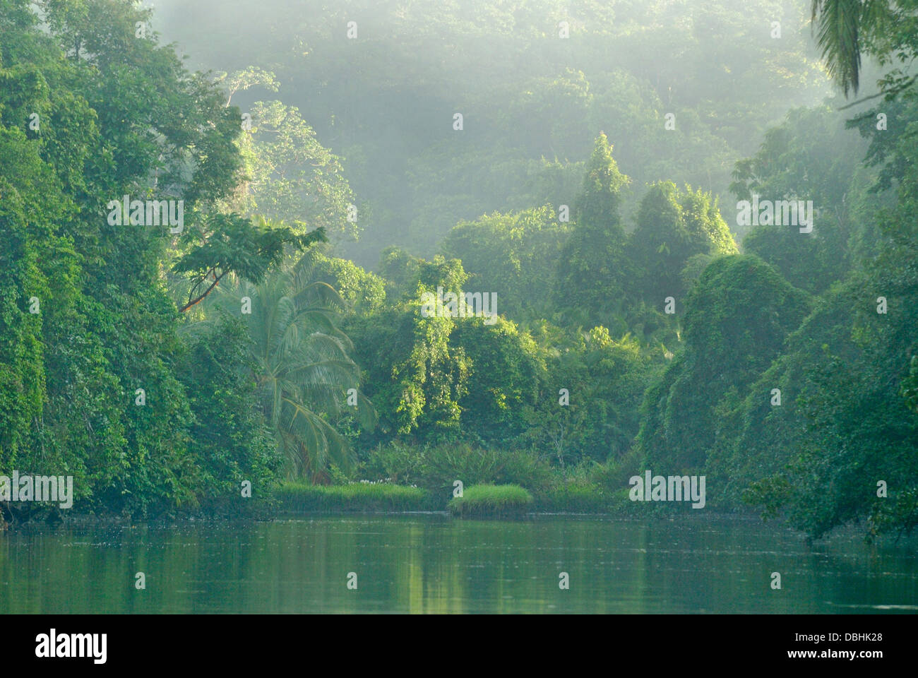 Primary rainforest in Corcovado National Park, Costa Rica - Stock Image