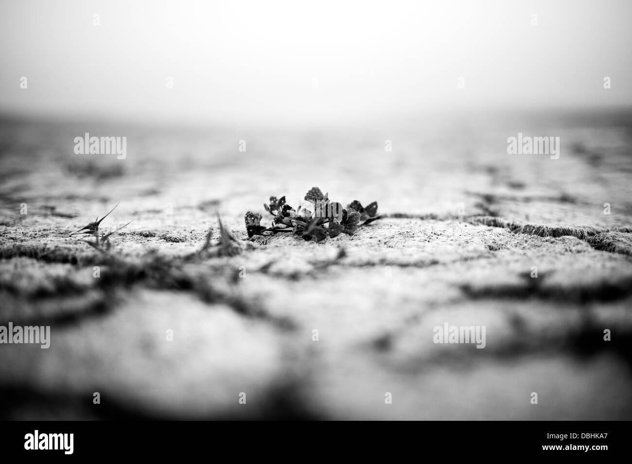 Drought ground of death lake Koronia in northern Greece. (b&w version) - Stock Image