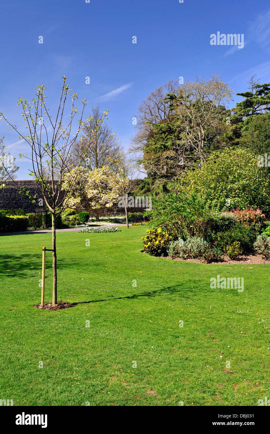View of the park in Springtime, Chichester, West Sussex, England, UK, Western Europe. - Stock Image
