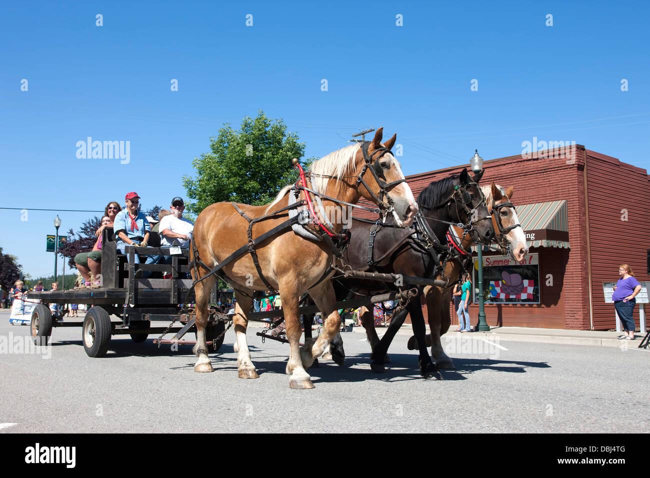 Draft horses in parade. - Stock Image