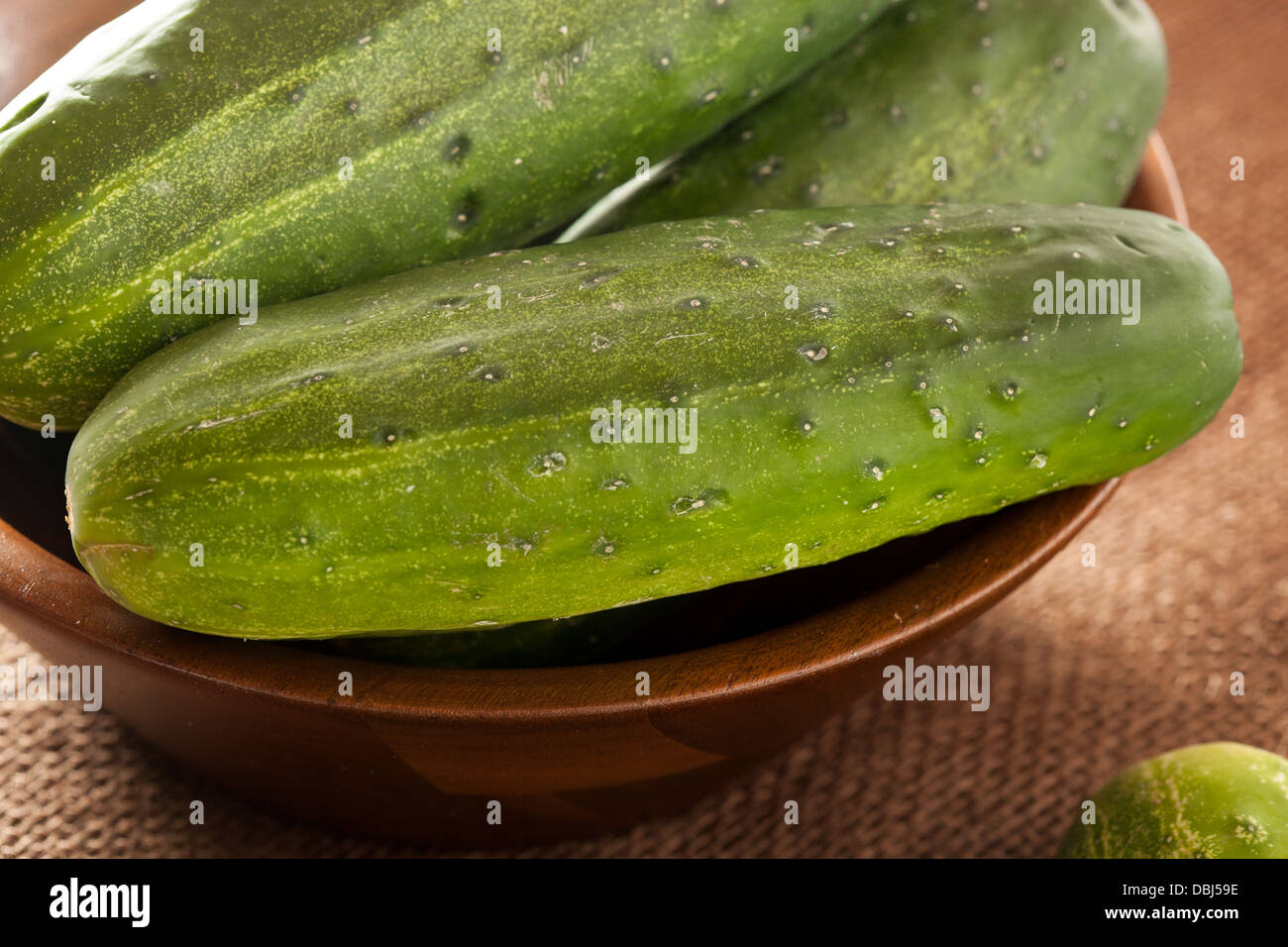 Organic Green Pickle Cucumbers used for Pickling - Stock Image