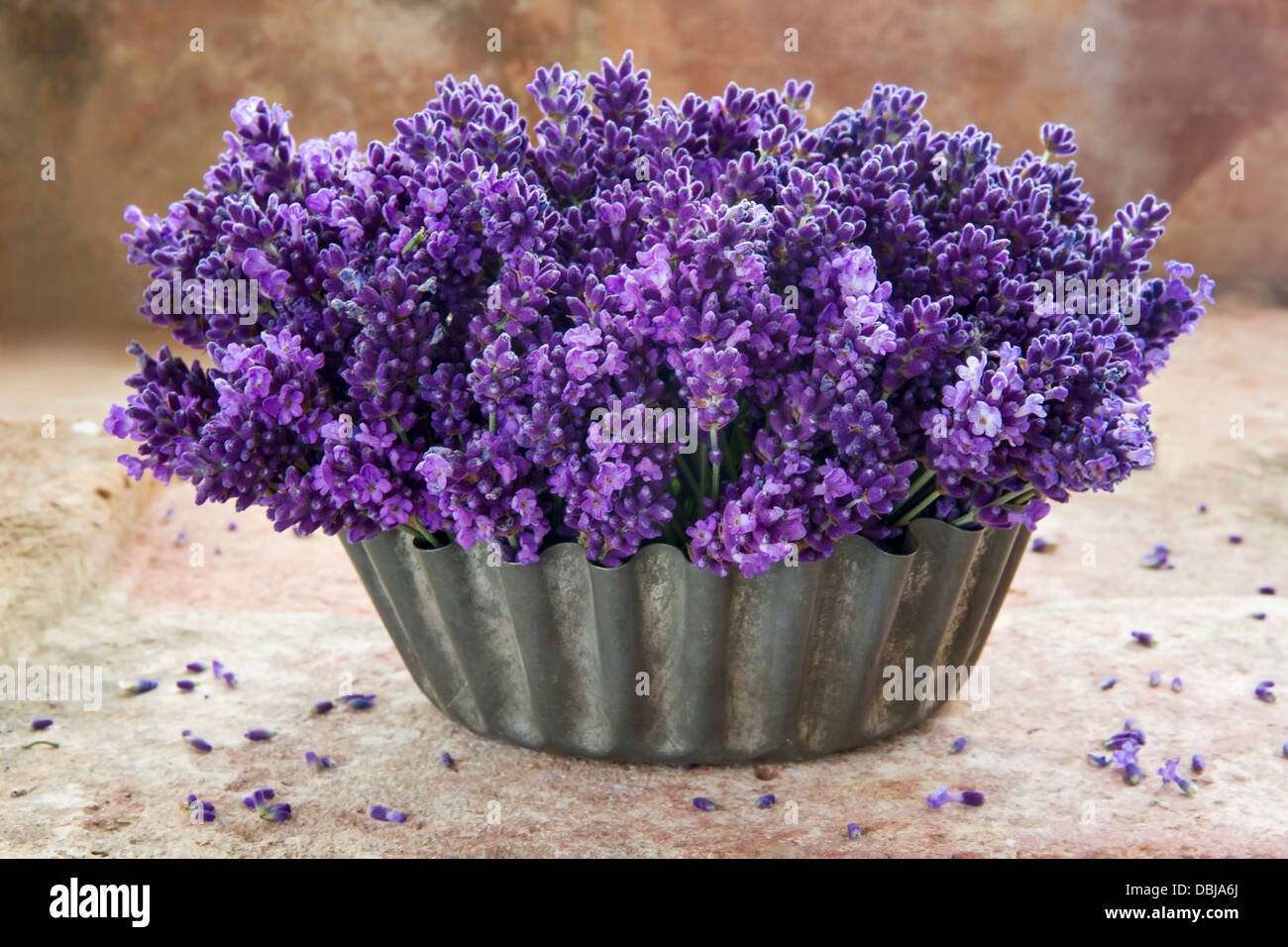 Purple Flower Arrangement In Vintage Stock Photos Purple Flower