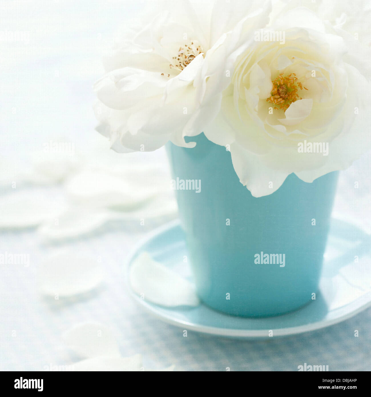 White rose in a light blue vase on shabby chic vintage background - Stock Image