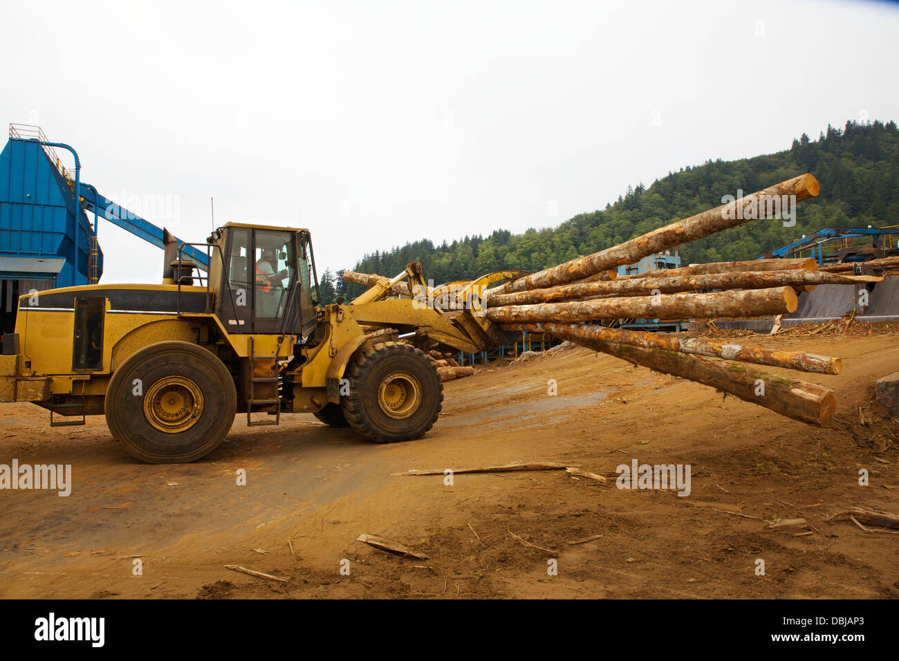 Logging forklift claw moving timber - Stock Image