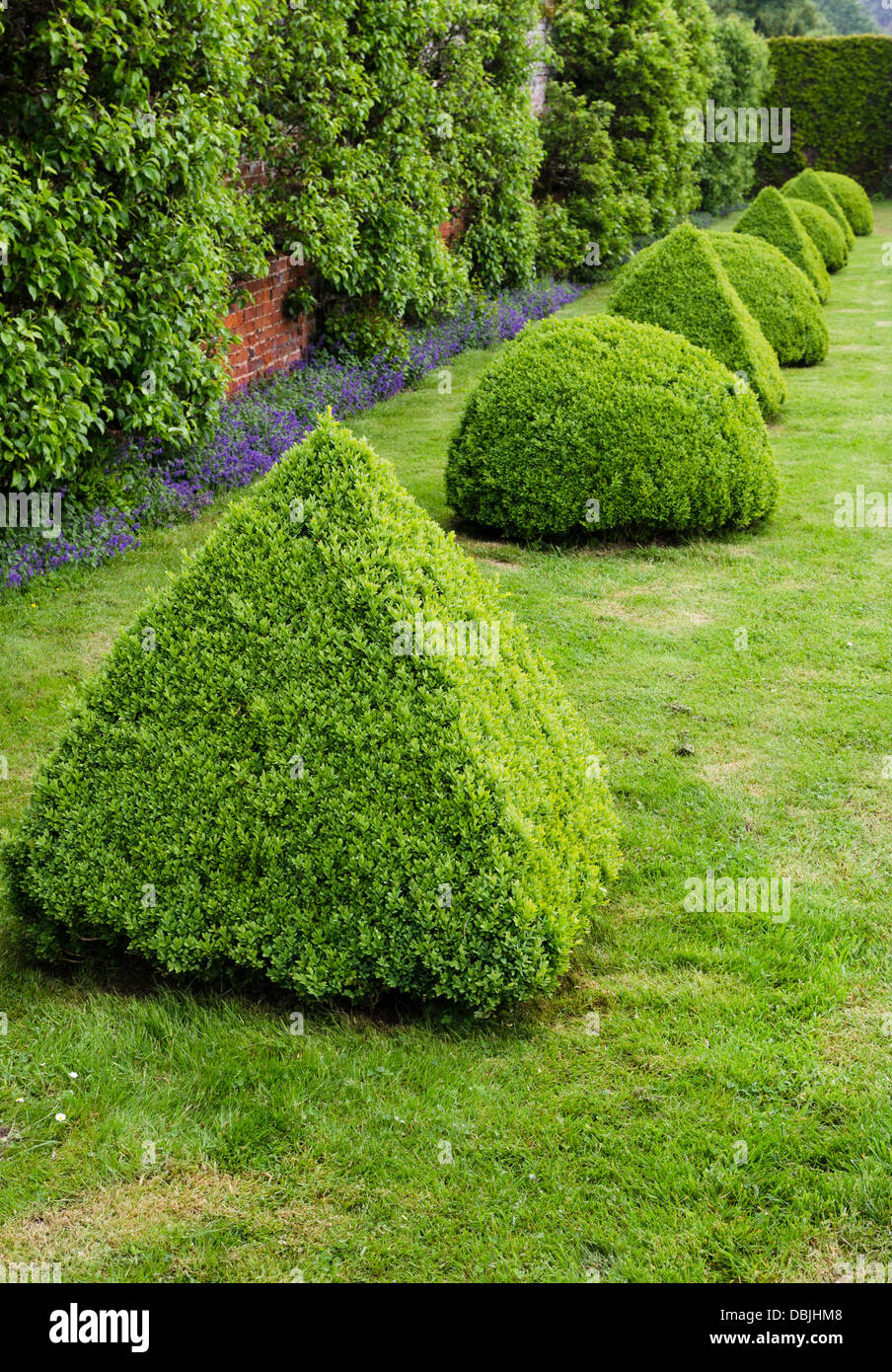 Topiary box hedging - buxes sempervirens - Stock Image