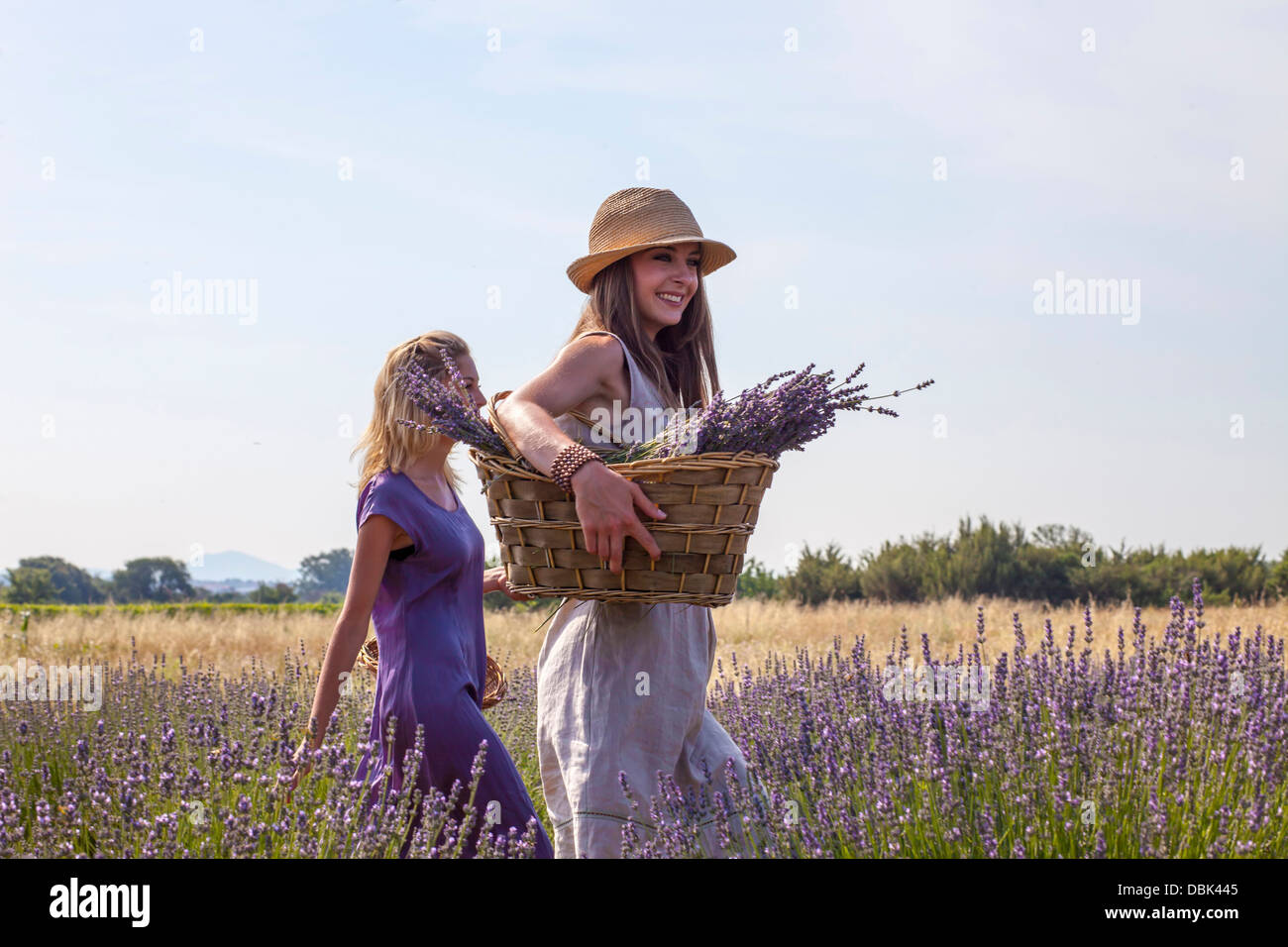 Young Women Walking Through Lavender Field, Croatia, Dalmatia, Europe Stock Photo