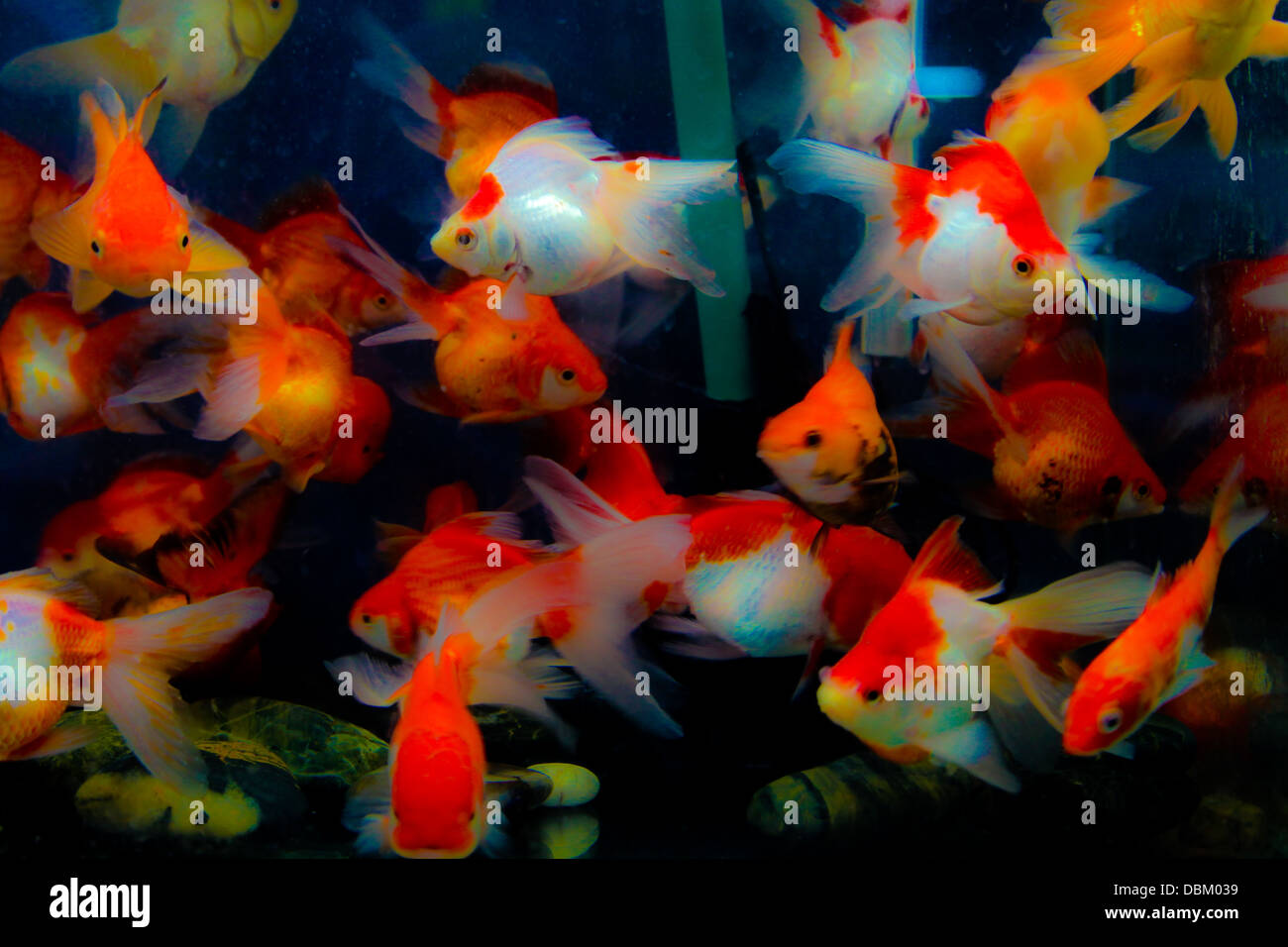 Fish Tank Stock Photos & Fish Tank Stock Images - Alamy