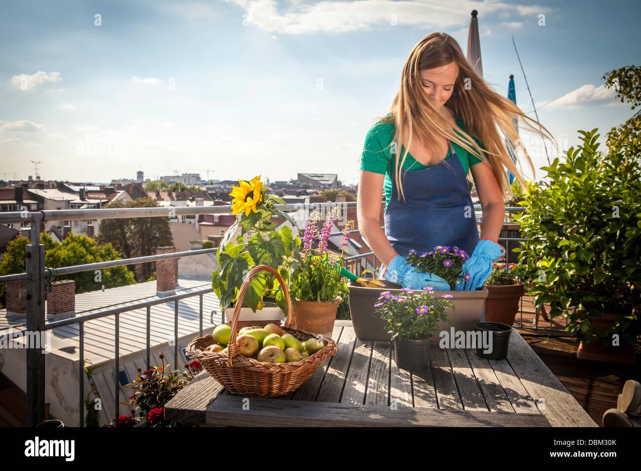 Woman On Balcony Planting Up Flower Box, Munich, Bavaria, Germany, Europe - Stock Image