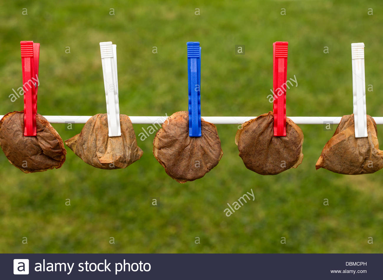 Used tea bags drying on a washing line - Stock Image