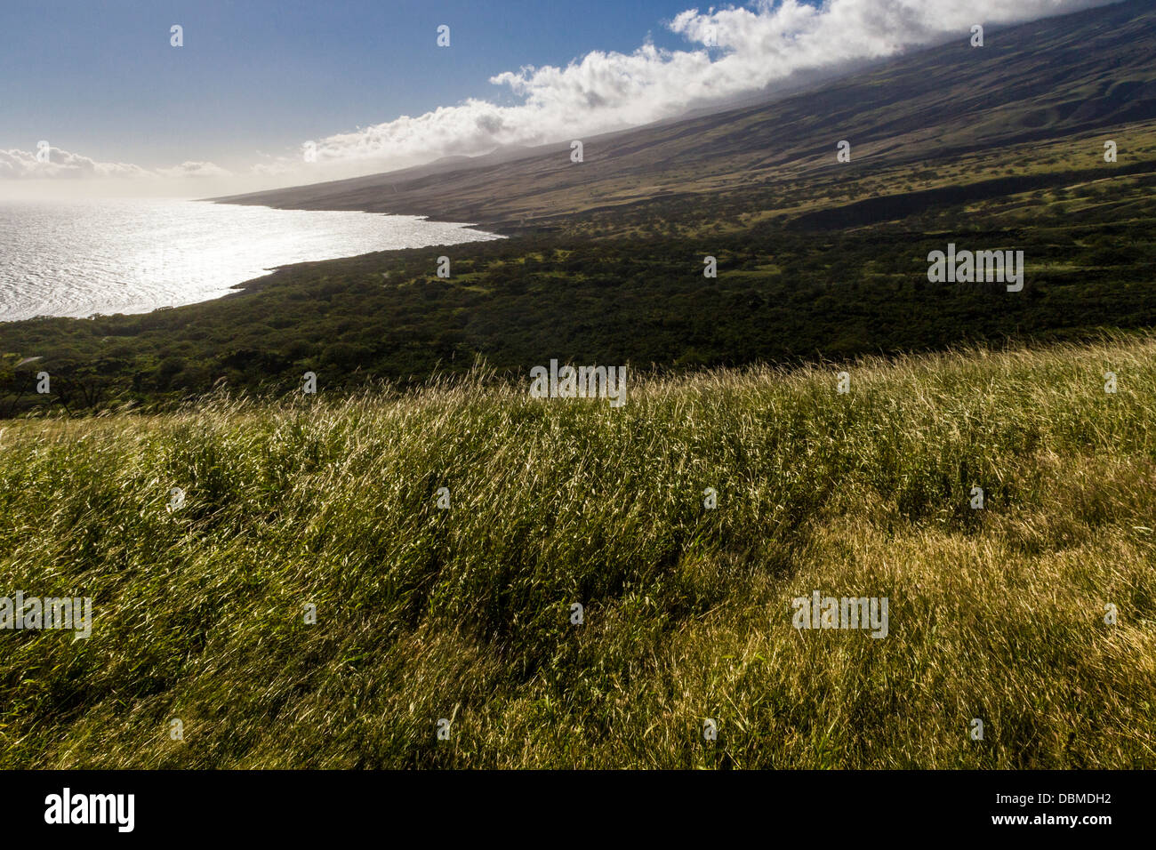 Piilani Stock Photos & Piilani Stock Images - Alamy