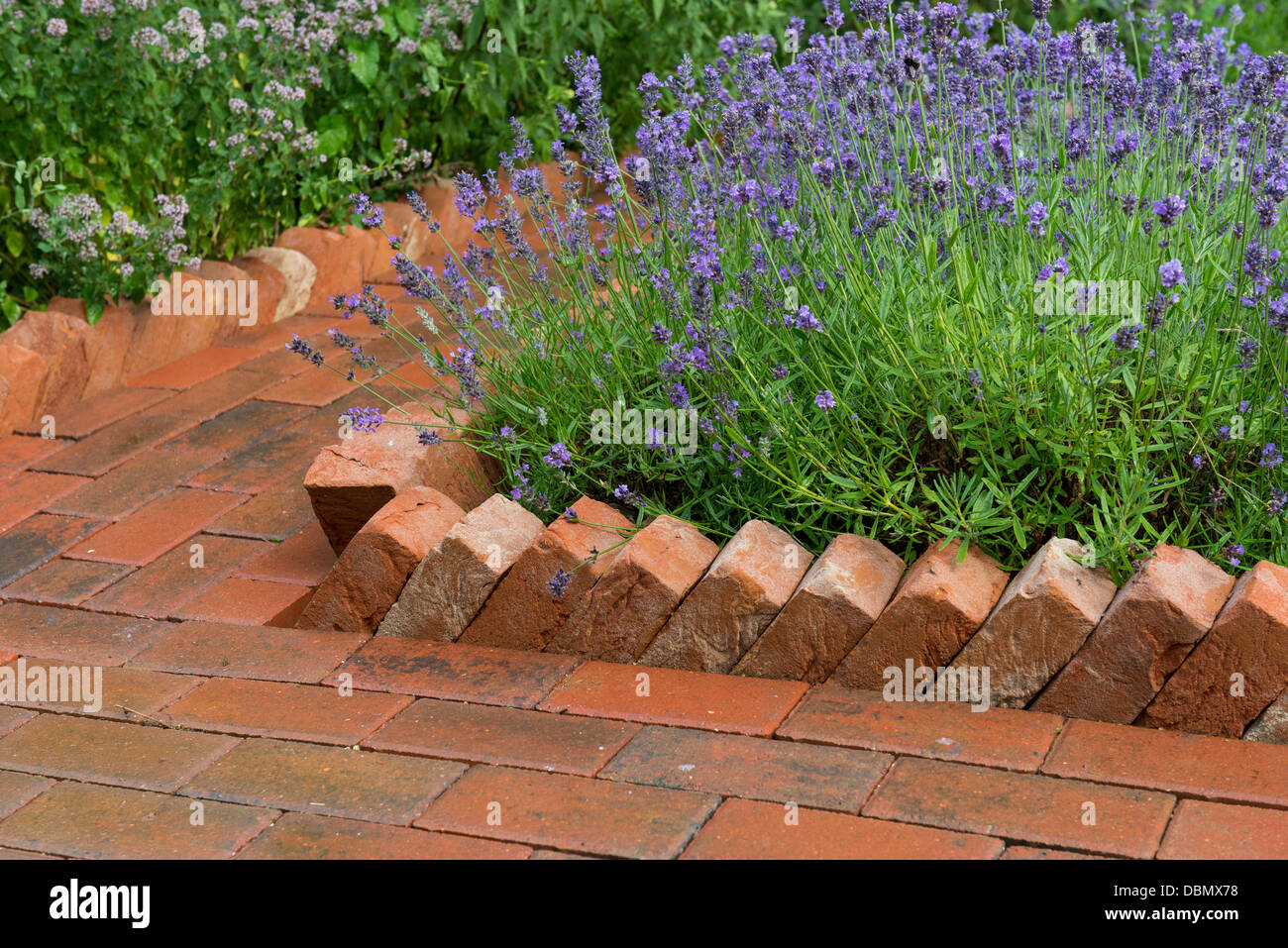 Attirant Garden Path Constructed From Concrete Pavers With A Saw Tooth Housebrick  Edging Bordering A Lavender Bed