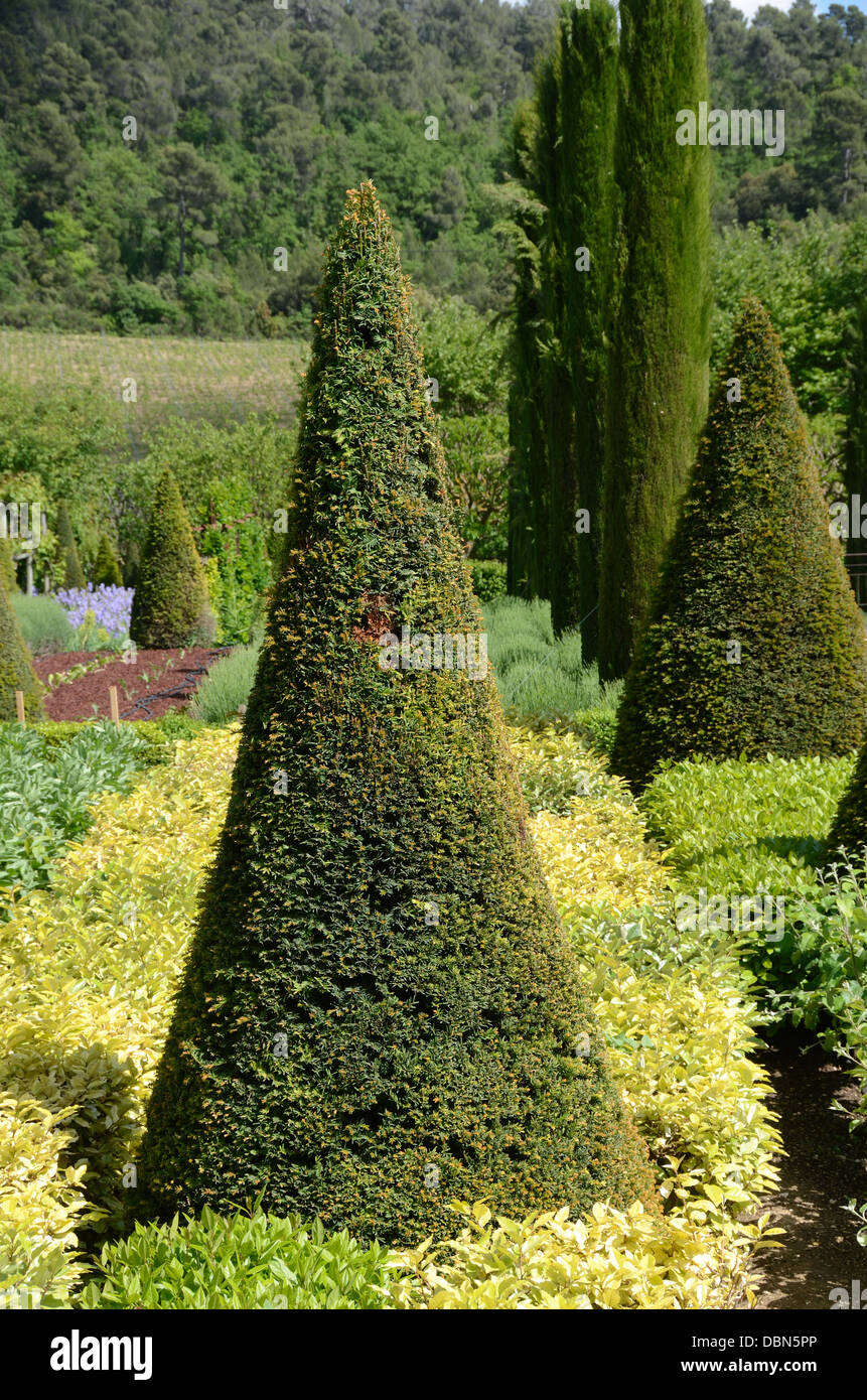 Topiary Gardens with Cone Shaped Yew Tree & Clipped Cypress Trees Château Val Joannis Pertuis Luberon Provence - Stock Image