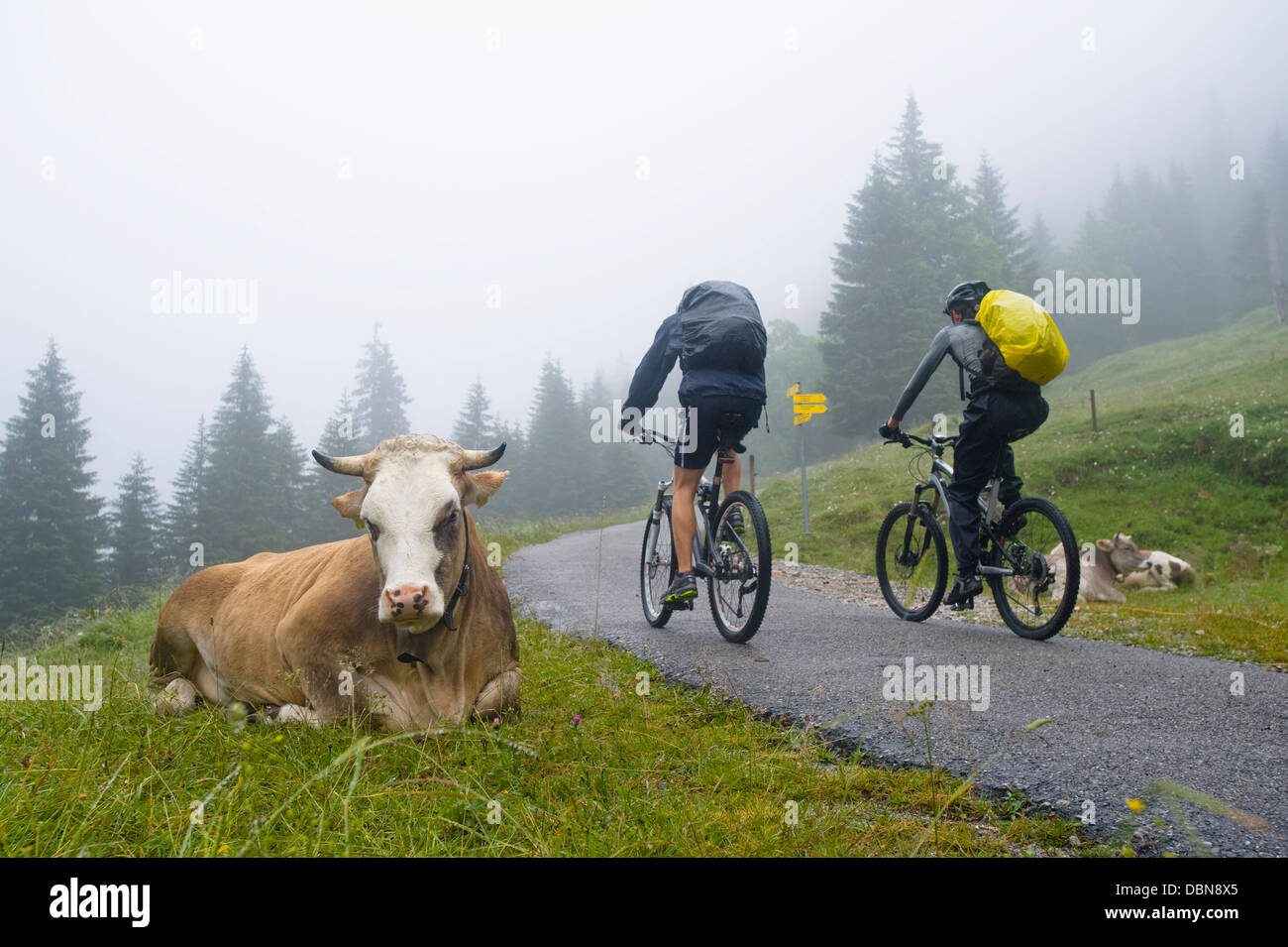 Mountain Bikers, Schwangau-Bleckenau, Bavaria, Germany - Stock Image
