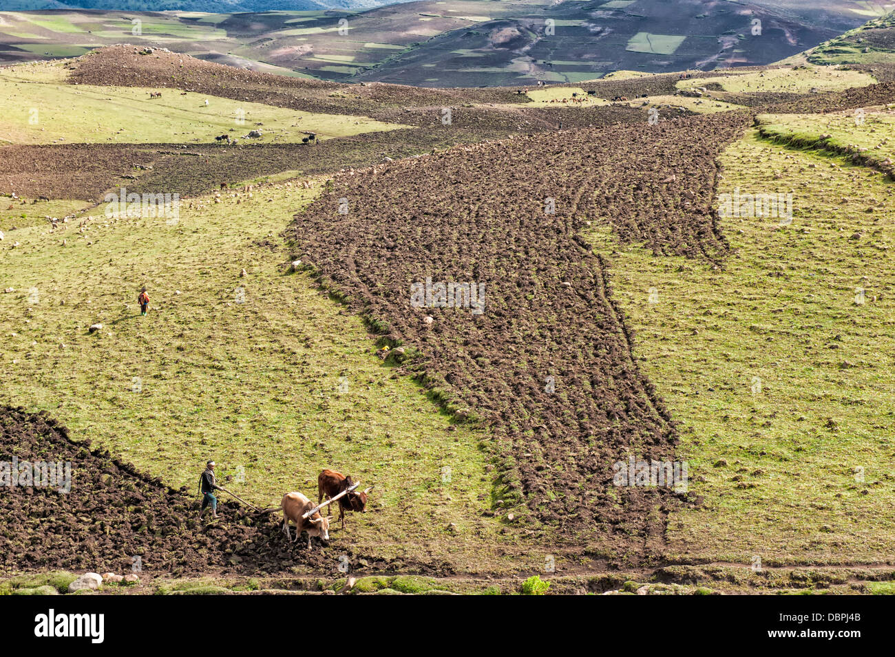 Farmer working his field, Simien Mountains National Park, UNESCO World Heritage Site, Amhara region, Ethiopia, Africa - Stock Image