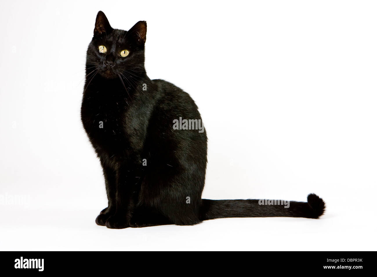 superstition and black cat essay The black cat symbolizes the state of the narrator's soul-which is black, mutilated, and decaying the black cat is symbolic because it is the cat's meowing that draws attention to the wall, and.