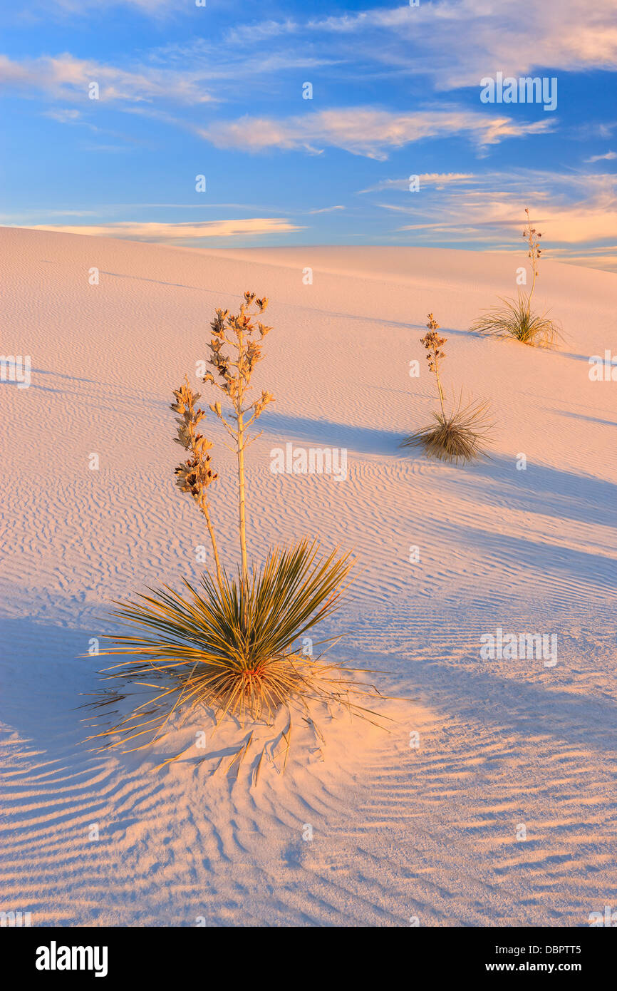White Sands National Monument, near Alamagordo, New Mexico, part of the Chihuahuan desert. - Stock Image