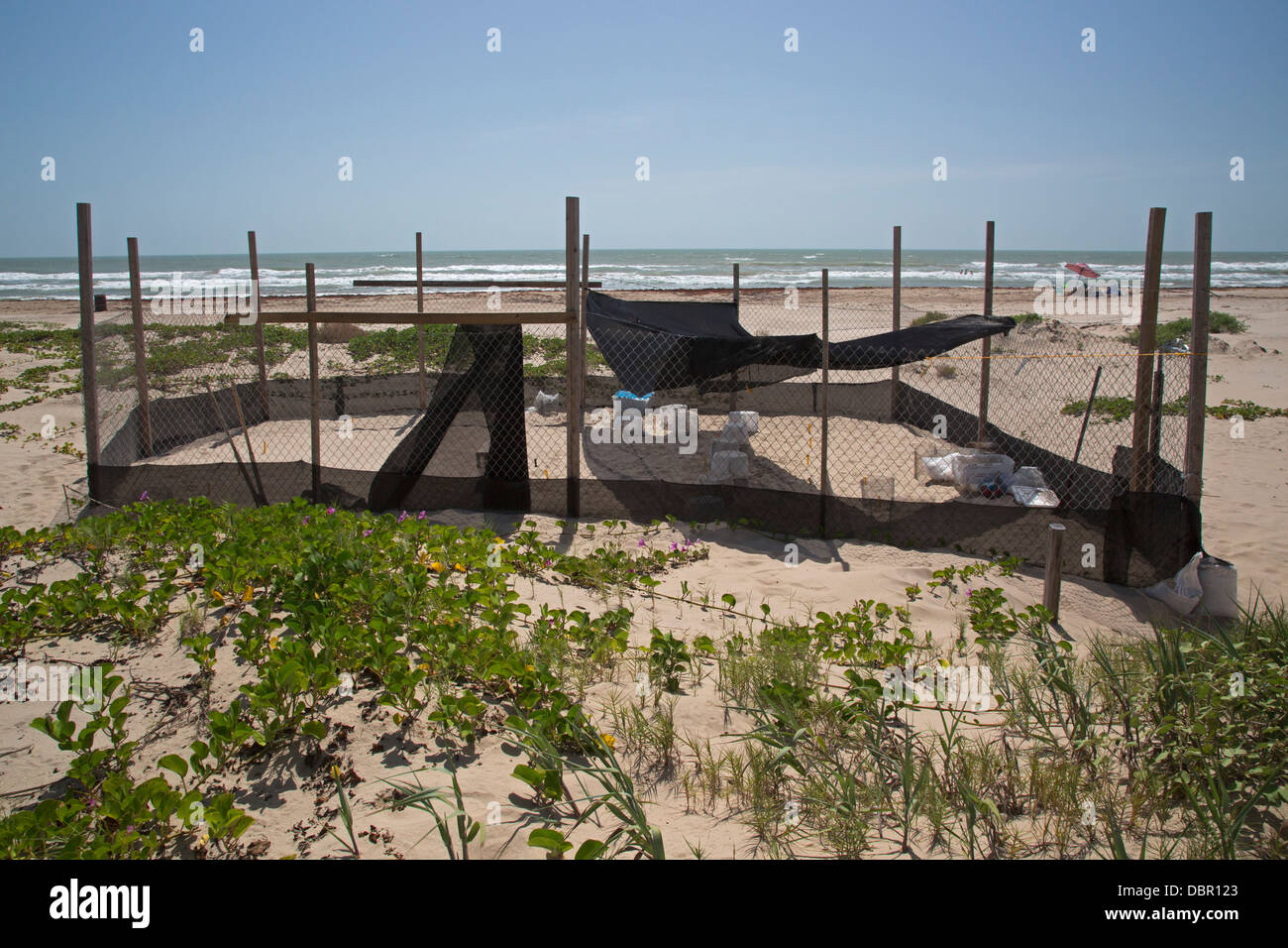 Protected sea turtle nests on South Padre Island, Texas - Stock Image