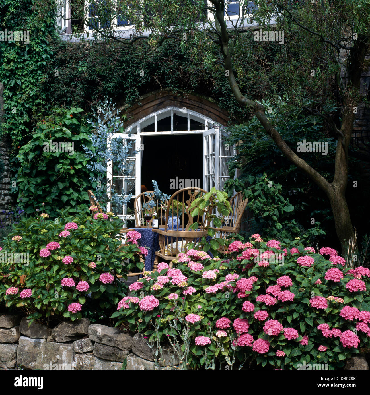 Pink Hydrangeas In Front Of Country Cottage With French Doors Open