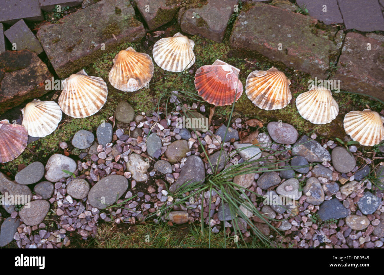 Garden Details With Close Up Of Edging With Seashells And Pebbles