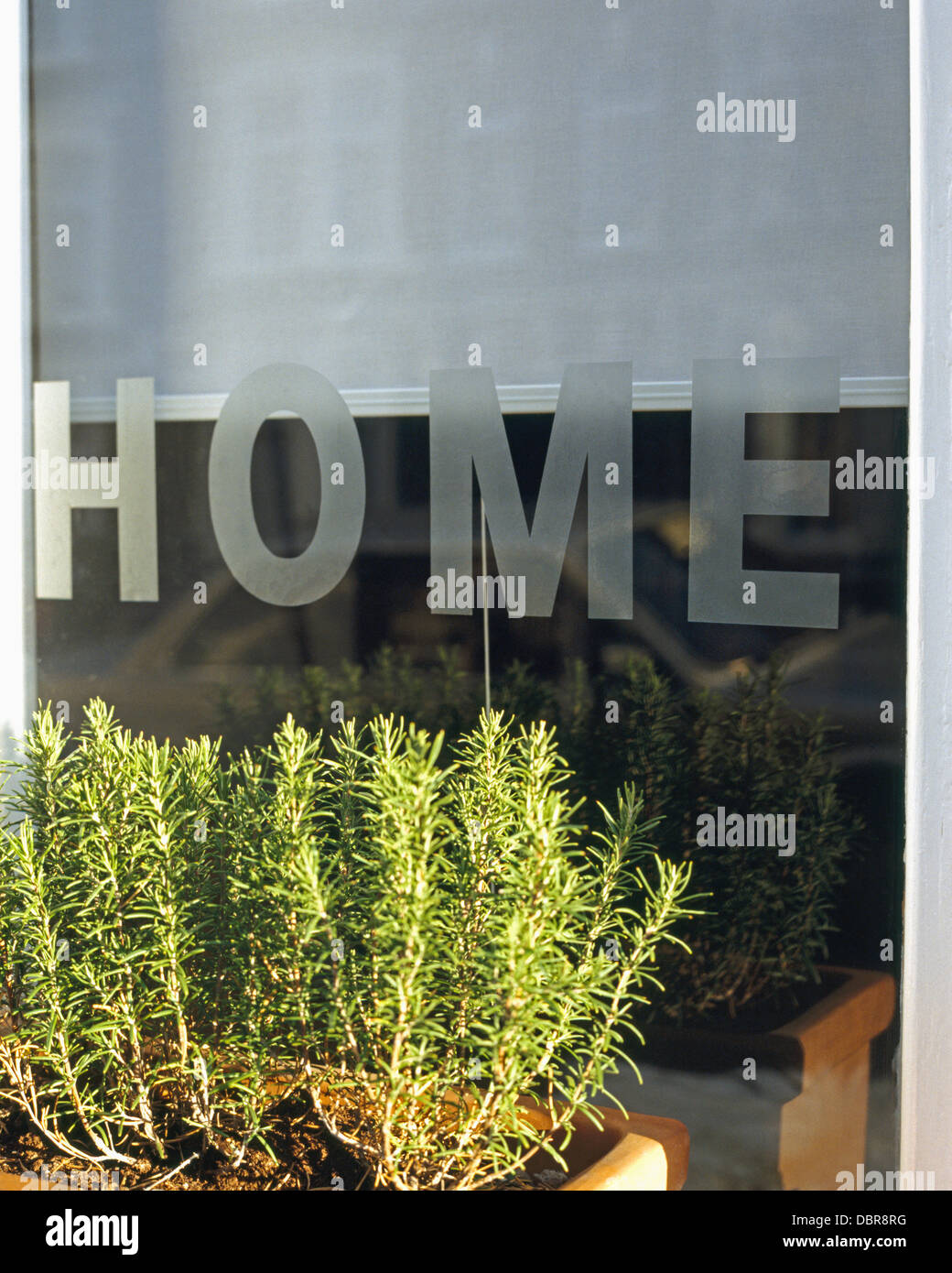 Close-up of rosemary in window box in front of window with engraved 'Home' motif - Stock Image