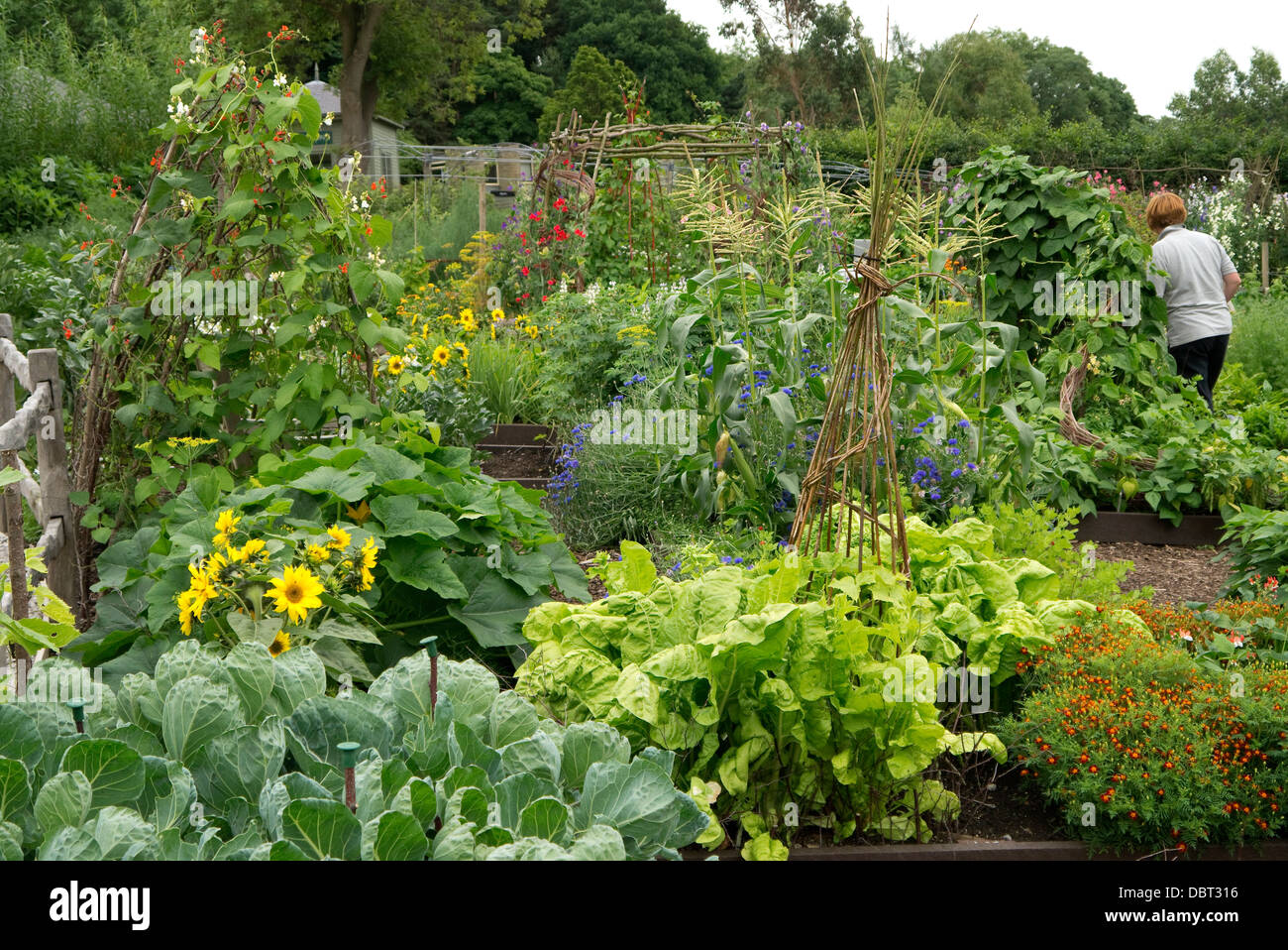 Raised bed kitchen garden with a mix of Vegetables and flowers. - Stock Image