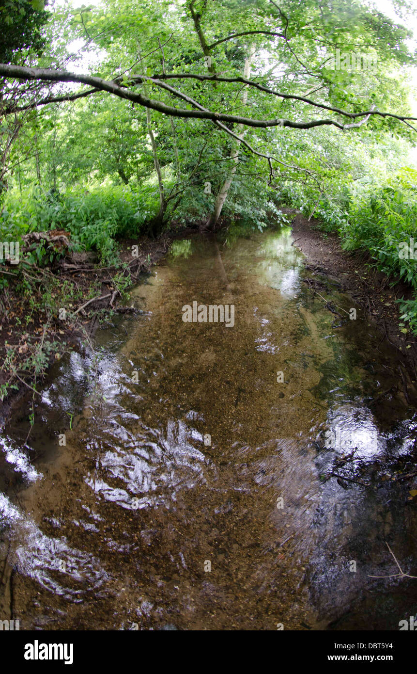 Chalk stream norfolk - Stock Image