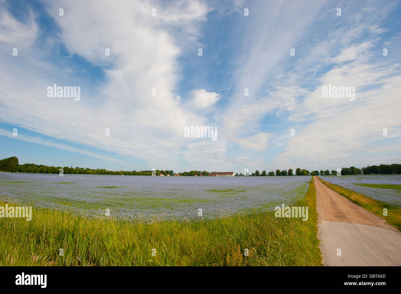 Dirt road vanishing into flooded filed - Stock Image