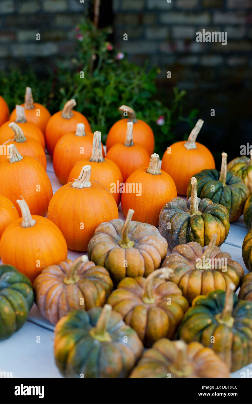 View of pumpkins - Stock Image
