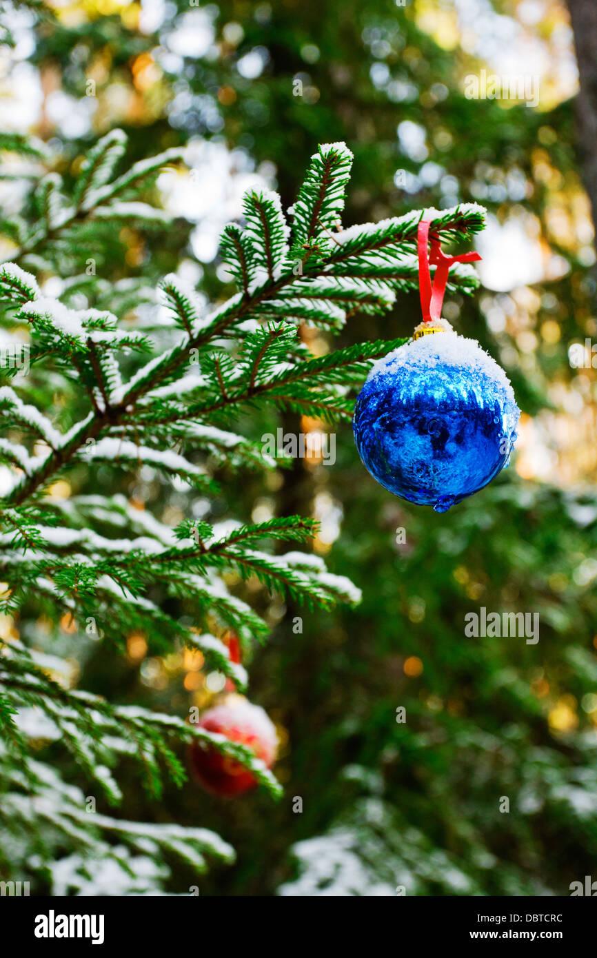 Christmas tree outdoors - Stock Image