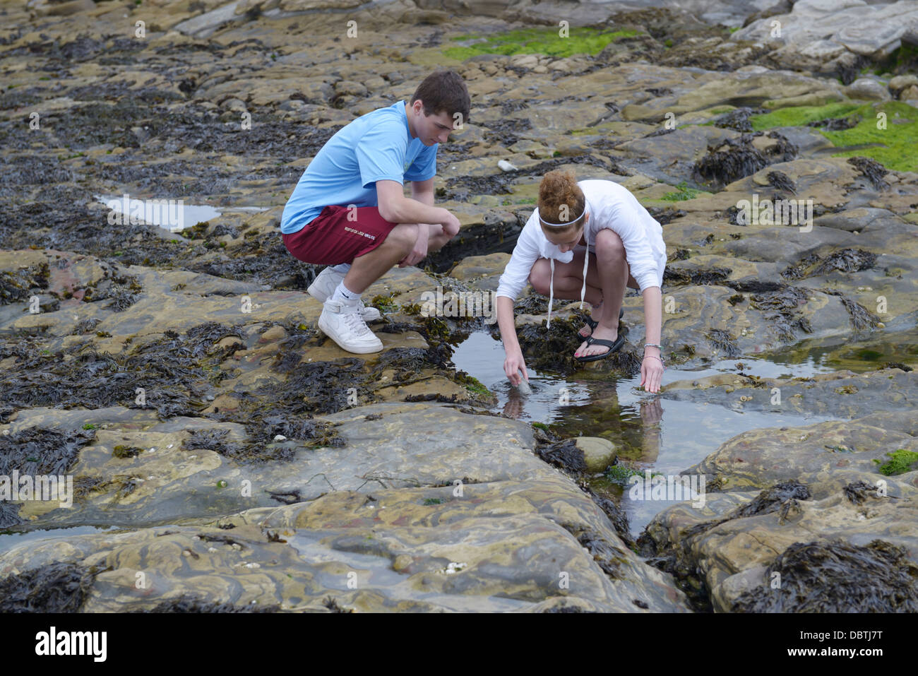 Tidepooling, Point Lobos State Natural Reserve, CA - Stock Image