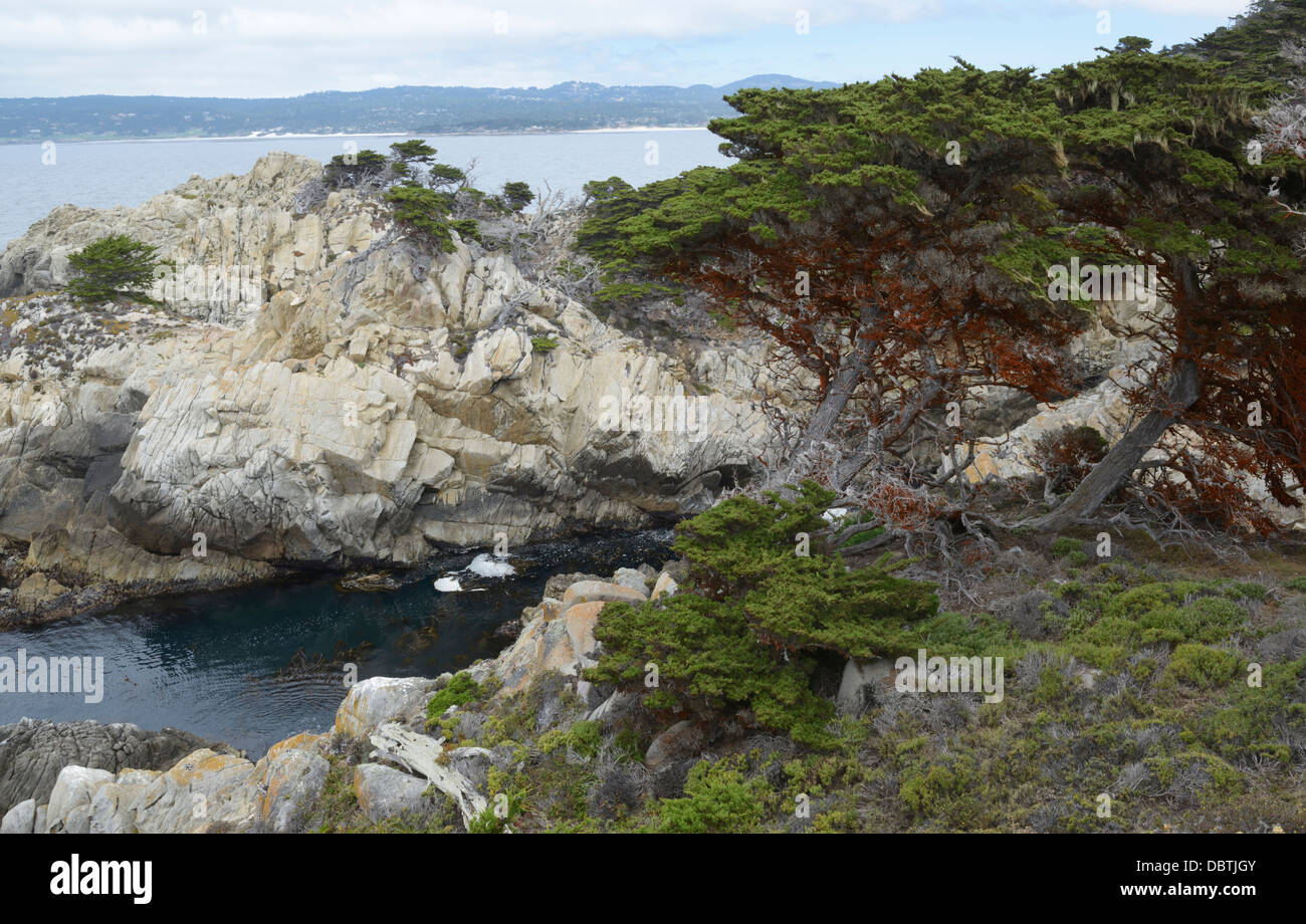 Cypress Grove, Point Lobos State Natural Reserve, CA - Stock Image