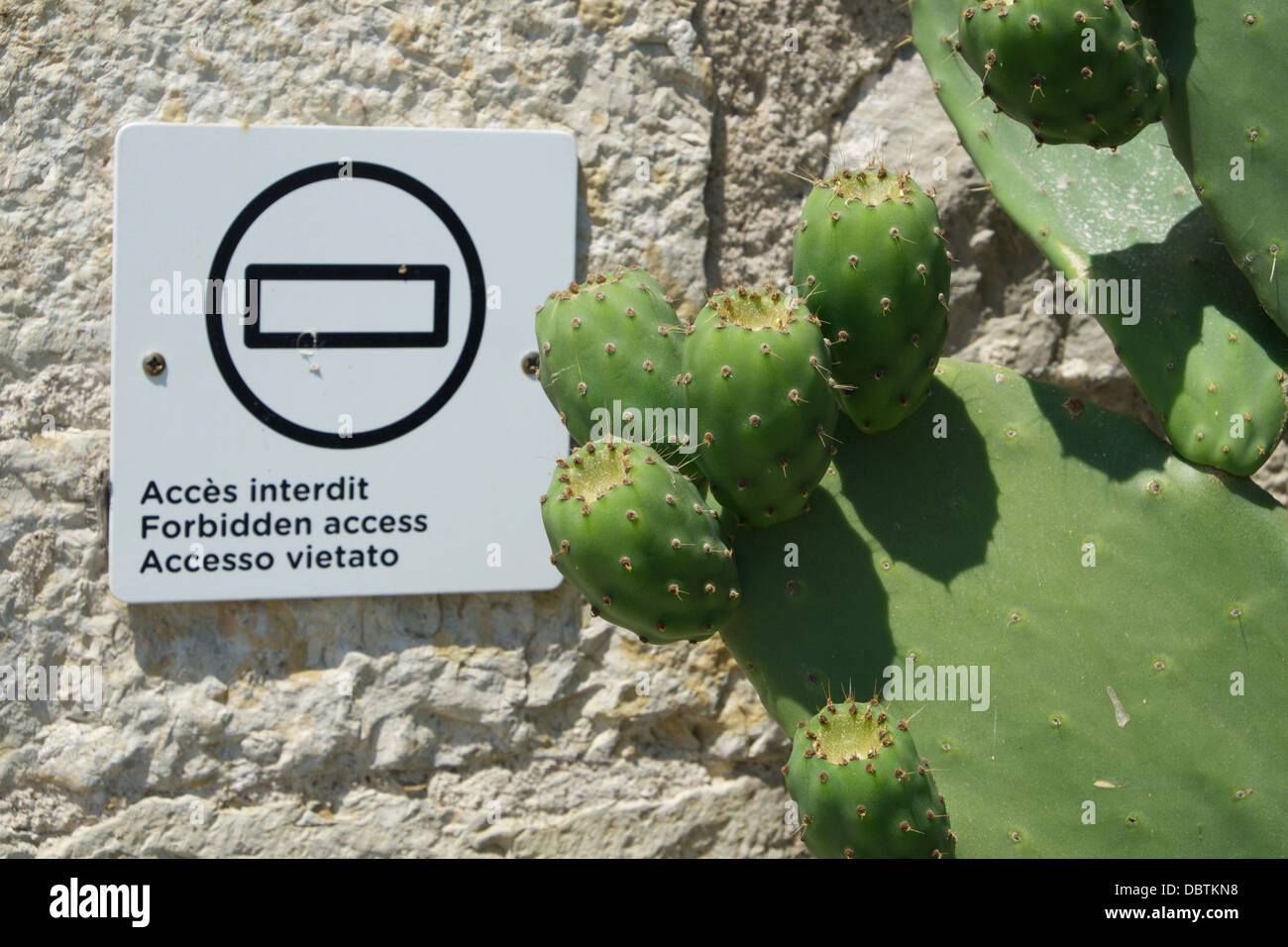 Cactus in front of an 'forbidden access' sign. - Stock Image
