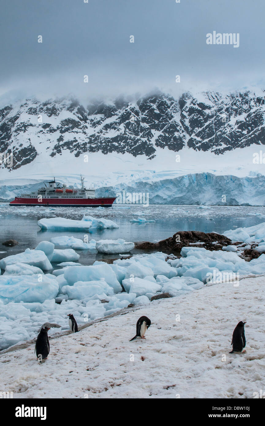 Cruise ship behind a Penguin colony, Neko Habour, Antarctica, Polar Regions - Stock Image