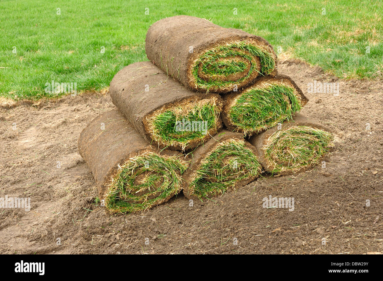 New grass lawn turf in rolls - Stock Image