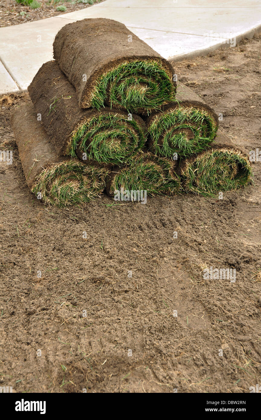 Lawn grass turf in rolls before laying new lawn - Stock Image
