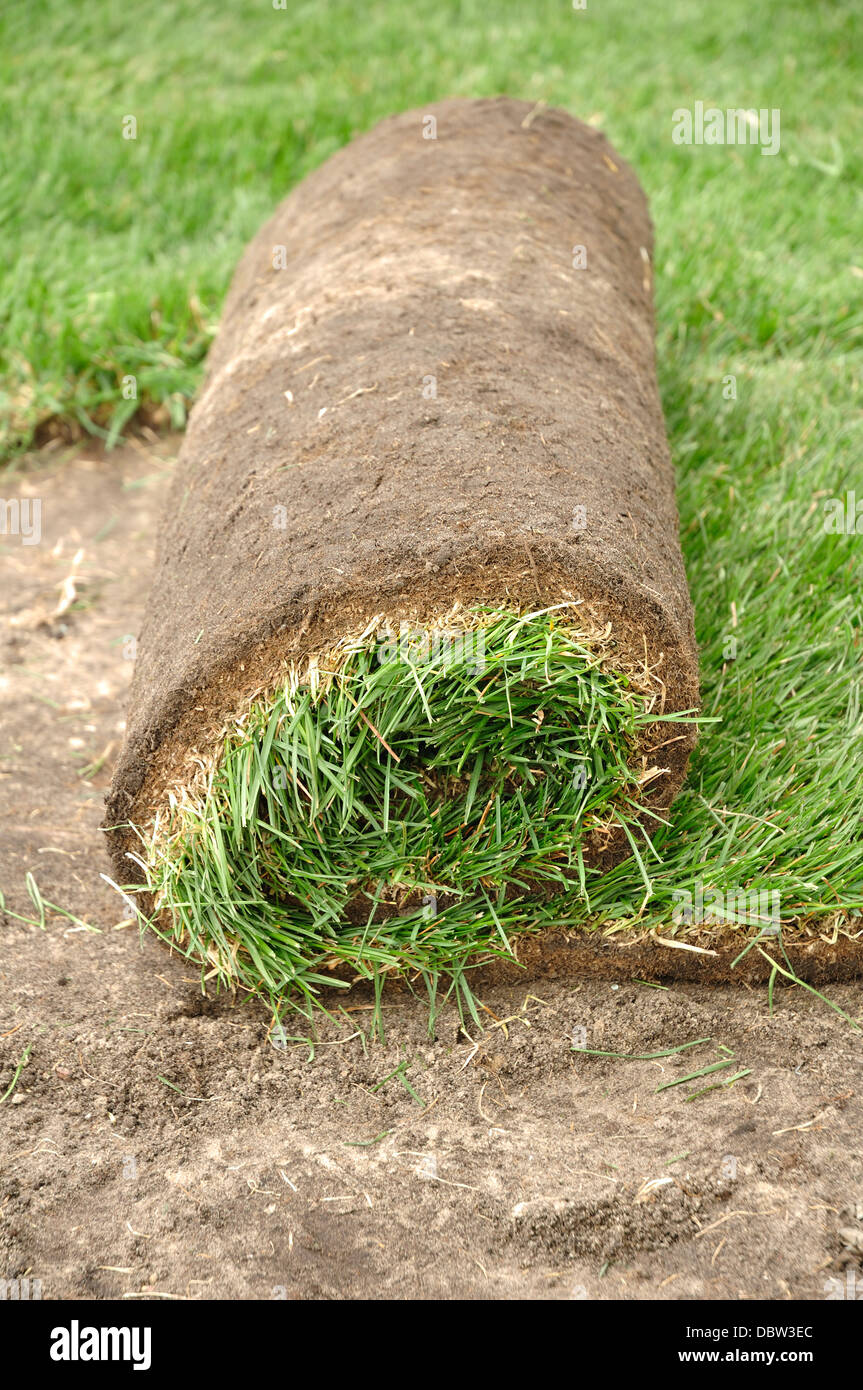 Laying new grass lawn turf - Stock Image