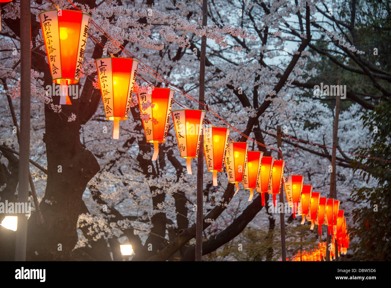 Red lanterns illuminating the cherry blossom in the Ueno Park, Tokyo, Japan, Asia - Stock Image