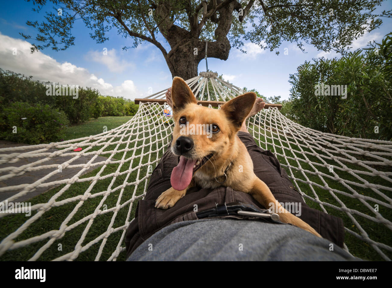 Man and dog relaxing on the hammock - Stock Image