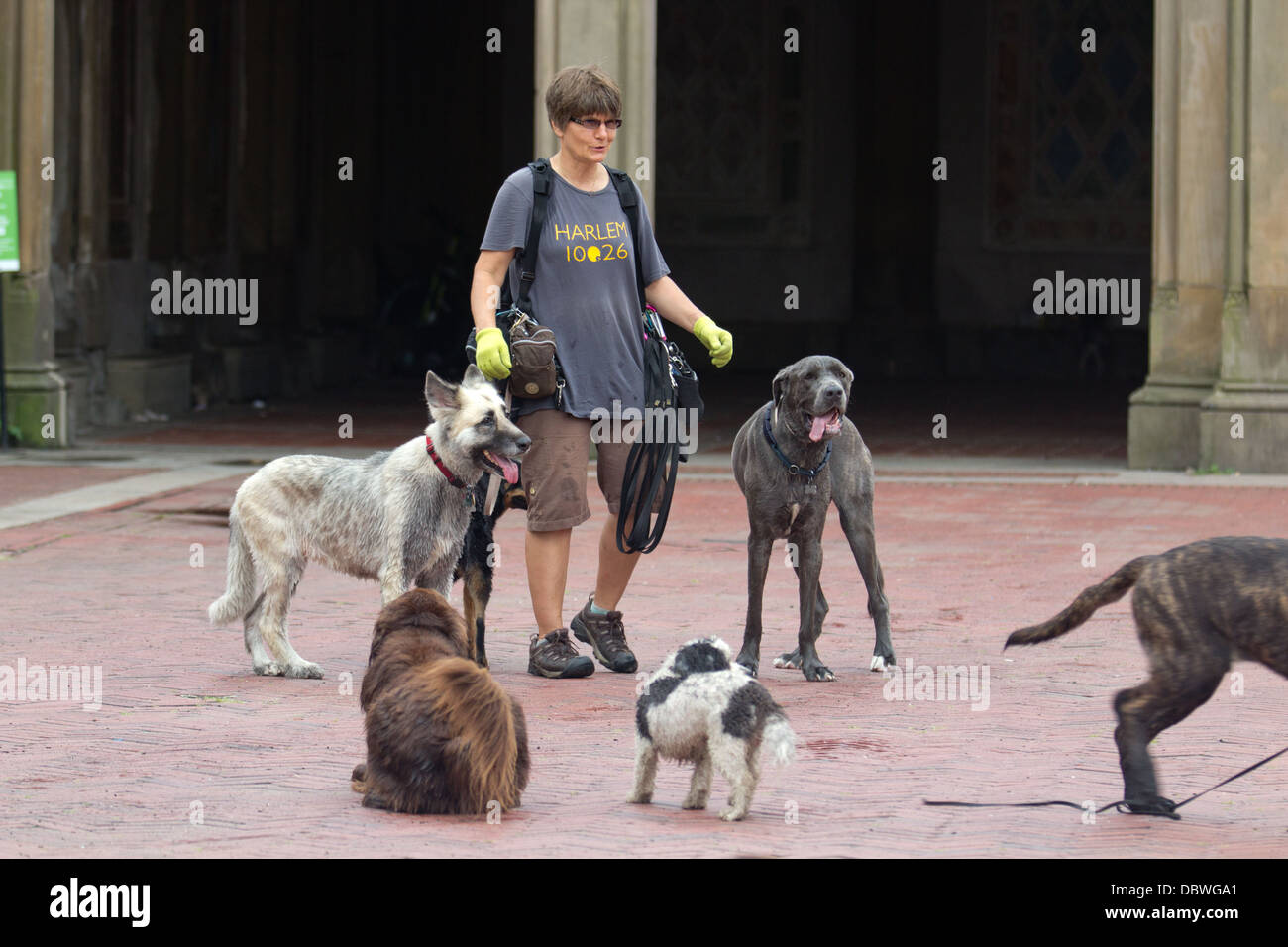 Woman with dogs in park Stock Photo
