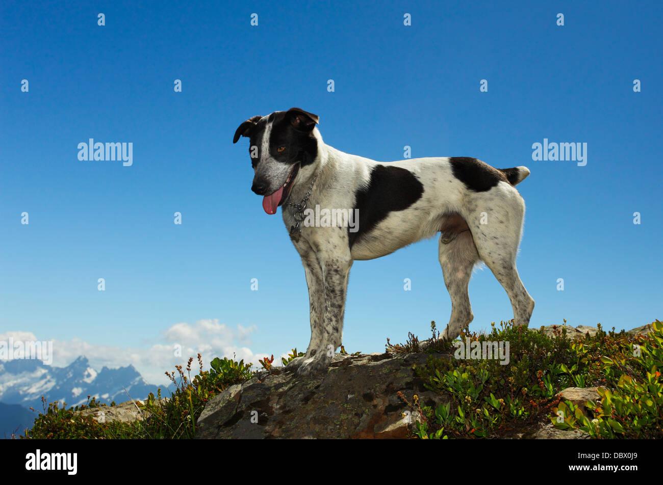 Heeler Stock Photos & Heeler Stock Images - Page 3 - Alamy