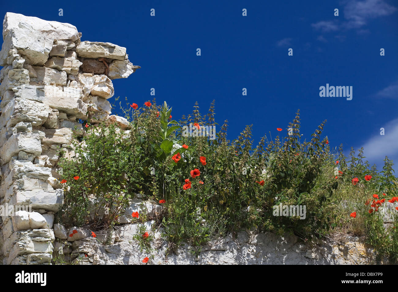 Monti Sibillini - Wild flowers - Italy - Stock Image