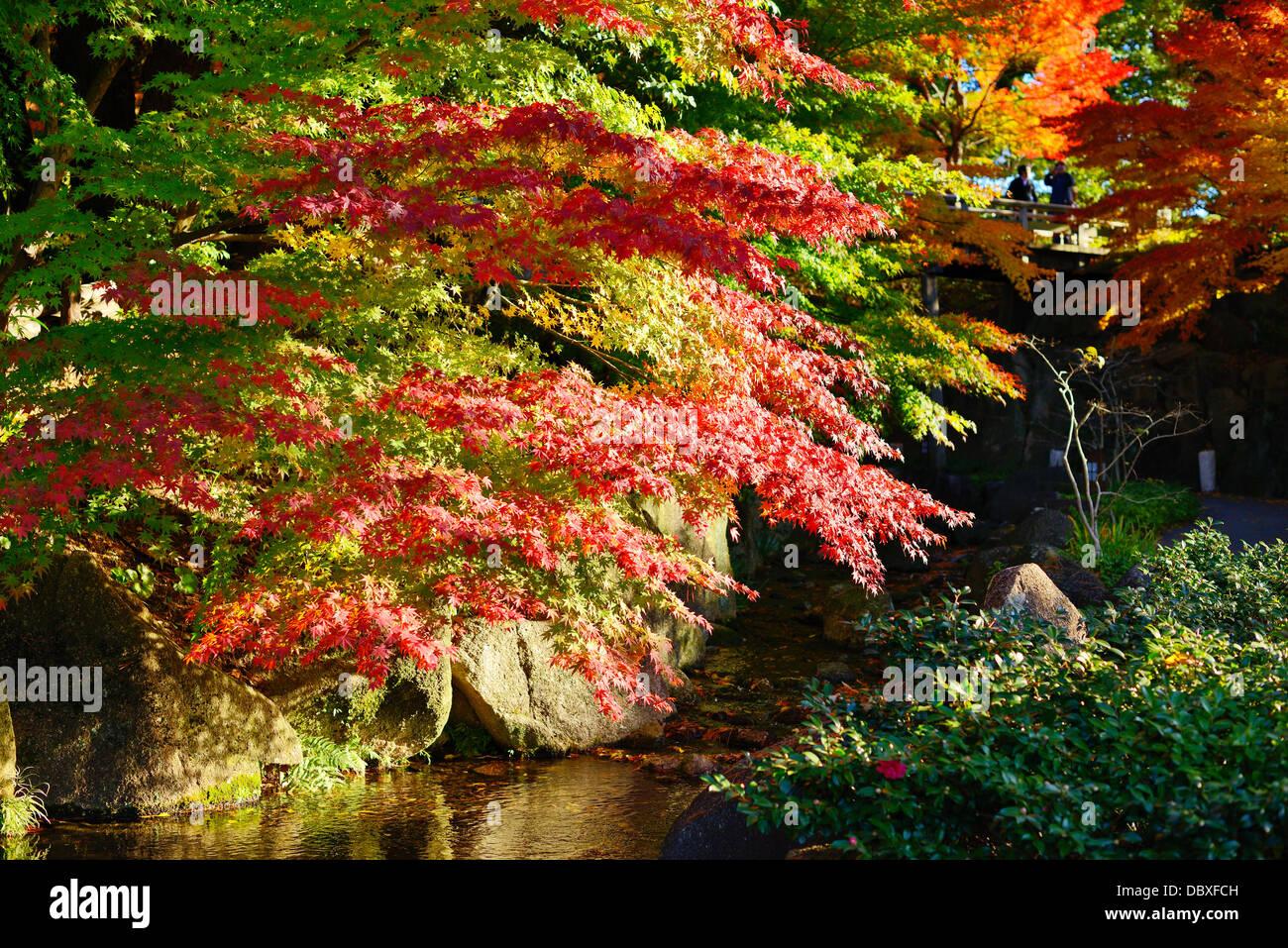 Fall foliage at in Nagoya, Japan. - Stock Image