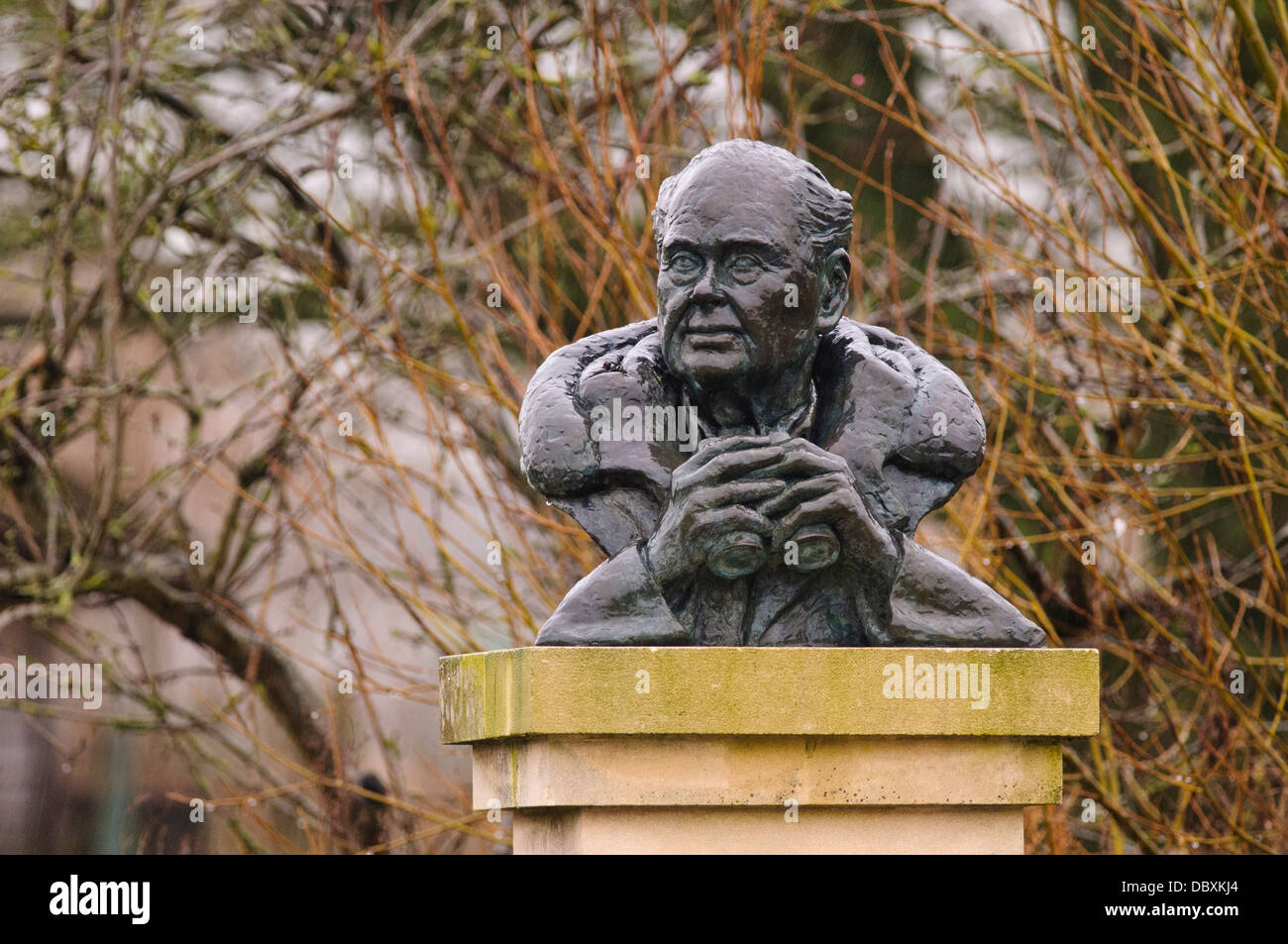 A bust of Sir Peter Scott, naturalist and founder of the wildfowl and wetland trust, wet from rain, at Slimbridge Stock Photo