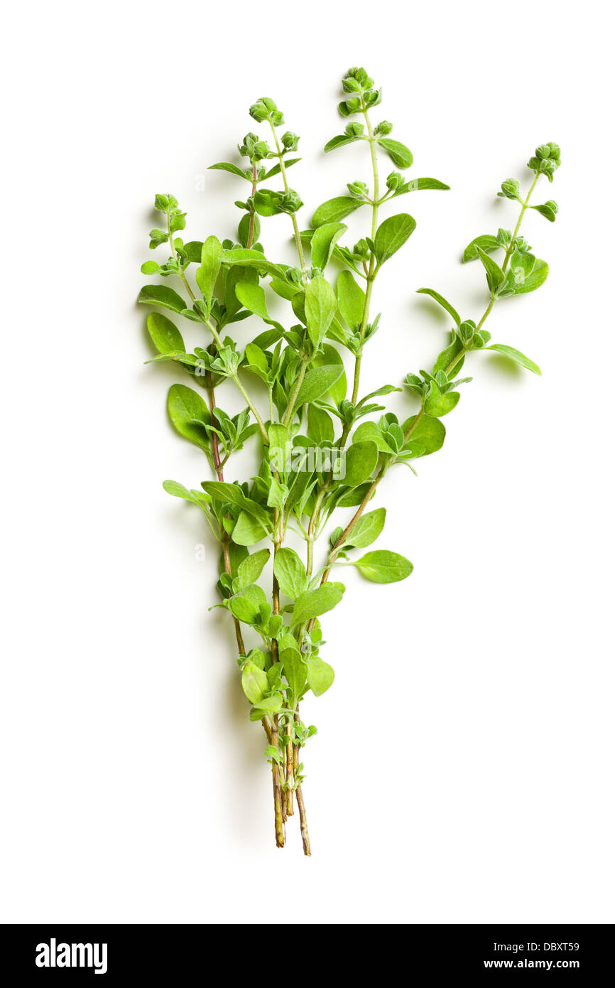 sprig of marjoram on white background - Stock Image